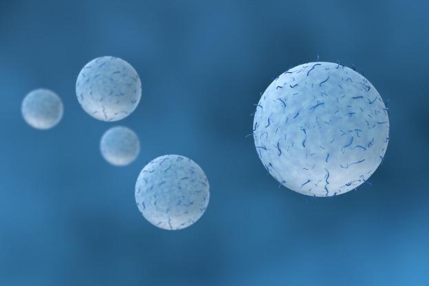 Blog_WhiteBlood_Cells